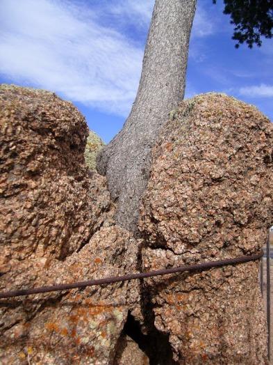 tree-rock-wyoming-5[6]